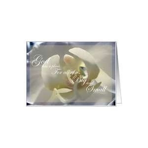 Loss of Premature Baby Sympathy White Orchid Card: Health