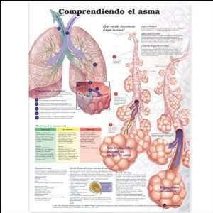Understanding Asthma Anatomical Chart in Spanish (Entendiendo El Asma)