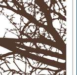 VINYL WALL ART DECAL STICKER TREE TOP BRANCHES   DECOR
