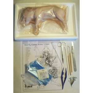 Fetal Pig Dissection Kit with Anatomy Chart and Test, Tray