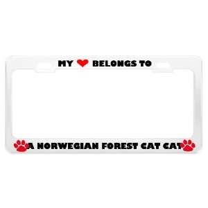 A Norwegian Forest Cat Cat Pet White Metal License Plate