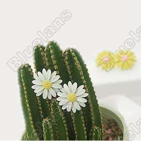 Sweet Lovely Daisy Flower Cute Fashion Earring 5182 White