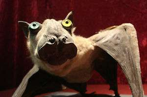 Taxidermy Fruit Bat Mounted