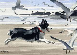 BORDER COLLIE Painting Dog Art ACEO Print Signed DJR