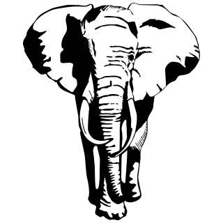 Elephant Wall Stickers / Wall Decals 5053379035758
