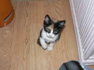 Regalo preciosos gatitos pequeños (9399502)    anuncios