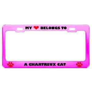 Chartreux Cat Pet Pink Metal License Plate Frame Tag Holder
